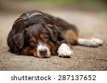 Sad Dog Lying On The Ground