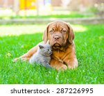 Stock photo bordeaux puppy and kitten playing on nature 287226995