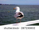 Seagull Standing On A Railing...