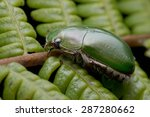 macro image of a green scarab... | Shutterstock . vector #287280662