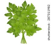bunch of parsley | Shutterstock .eps vector #287311982