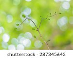 Tree With Abstract Bokeh Of...