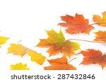 autumn maple leaves isolated on ... | Shutterstock . vector #287432846