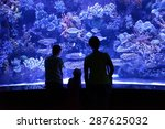 People Look At A Large Aquarium