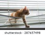 red kitten tangled in window...   Shutterstock . vector #287657498