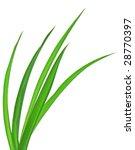Macro Of Long Grass Blades ...