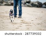man with boston terrier at the... | Shutterstock . vector #287739332