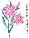 watercolor pink lily flowers... | Shutterstock .eps vector #287758655