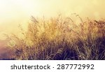 vintage effect. morning in the... | Shutterstock . vector #287772992