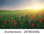 spring meadow of poppies... | Shutterstock . vector #287803586