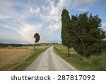 cypress trees and cornfields | Shutterstock . vector #287817092
