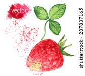 watercolor strawberries. | Shutterstock .eps vector #287837165