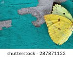 butterfly wing on grunge... | Shutterstock . vector #287871122