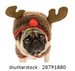 cute reindeer pug | Shutterstock . vector #28791880