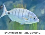 Picture Of Underwater Fish In...