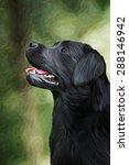 drawing dog breed black... | Shutterstock . vector #288146942
