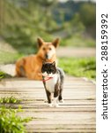 cat and dog in the village | Shutterstock . vector #288159392