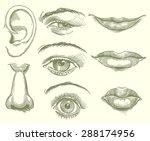 eyes  lips  nose  ear. hand... | Shutterstock .eps vector #288174956