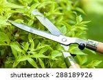 gardening  landscaped  cutting.   Shutterstock . vector #288189926