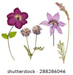 Stock photo set of wild dry pressed flowers and leaves isolated 288286046