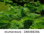 background of christmas tree... | Shutterstock . vector #288388286