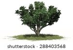 common hawthorn   separated on... | Shutterstock . vector #288403568