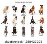 Stock photo a group of fifteen common large breed dogs together 288423206