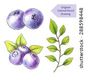 original blueberries drawn by... | Shutterstock .eps vector #288598448