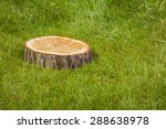 Stump Tree Plant On Green Grass ...