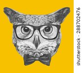 hand drawn portrait of owl with ... | Shutterstock .eps vector #288702476
