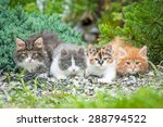 Stock photo four little kittens sitting in the garden 288794522