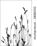 grass vector black silhouette. Ideally for your use - stock vector