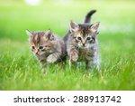 Two Little Tabby Kittens...