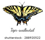Tiger Swallowtail Butterfly ...