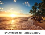 palm trees on the tropical... | Shutterstock . vector #288982892