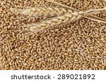 wheat | Shutterstock . vector #289021892