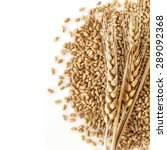wheat isolated on white... | Shutterstock . vector #289092368