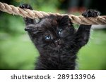 Black Kitten Is Suspended From...