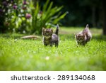 Stock photo two cute little kittens chase each other on a green lawn 289134068