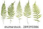 original size full frame of the ... | Shutterstock . vector #289293386
