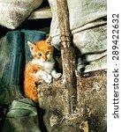 Cute White And Orange Kitten...