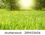 the grass in the park . trees...   Shutterstock . vector #289425656