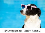 funny female dog wearing... | Shutterstock . vector #289472552