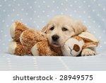 Golden Retriever Puppy Isolated ...