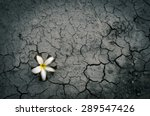 Fallen Flower On Dry Crack...