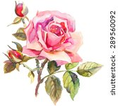 watercolor rose. elegant... | Shutterstock . vector #289560092
