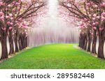The Romantic Tunnel Of Pink...