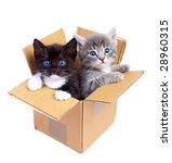 Stock photo kittens isolated on white background 28960315
