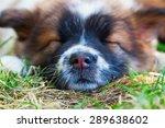 Cute Elo Puppy Sleeping In The...