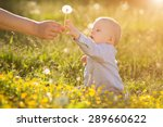 adult hand holds baby dandelion ... | Shutterstock . vector #289660622